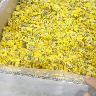 这是一张关于金丝皇菊花茶 袋装 一级的产品图片
