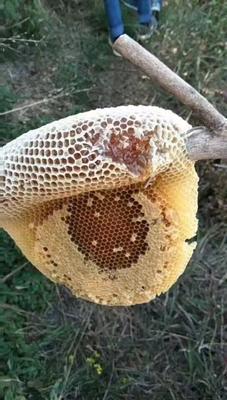 云南省德宏傣族景颇族自治州芒市野生蜂蜜 塑料瓶装 100% 1年