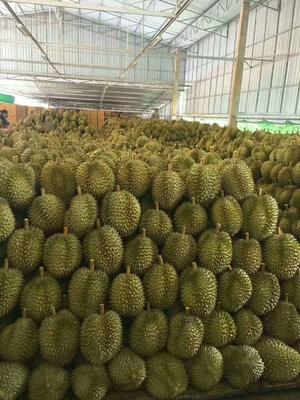 广西壮族自治区南宁市江南区泰国金枕榴莲 80 - 90%以上 3.3公斤