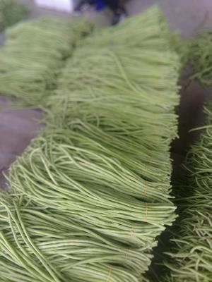 广西壮族自治区北海市合浦县绿翡翠长豆角 60cm以上 打冷