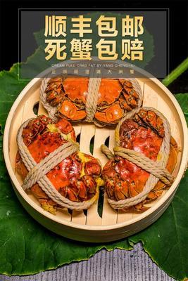 江苏省苏州市苏州工业园区阳澄湖大闸蟹 3.5-4.0两 统货
