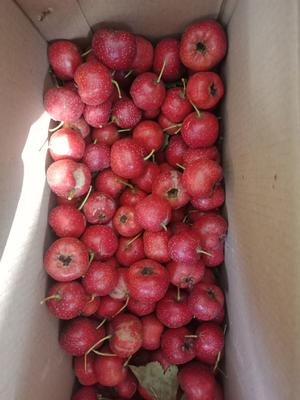 这是一张关于甜红子山楂 5 - 10克的产品图片