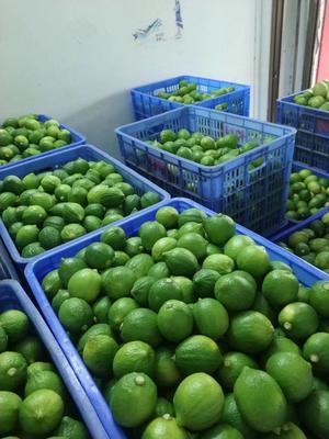 广东省广州市白云区香水柠檬 2.7 - 3.2两