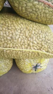 这是一张关于白沙系列花生 鲜货 带壳花生的产品图片