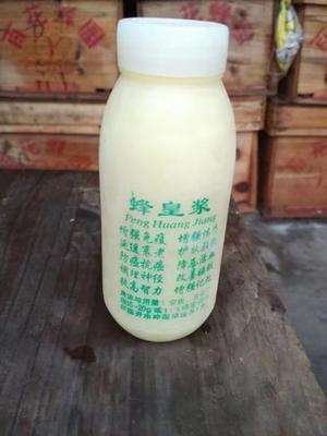 这是一张关于蜂王浆 塑料瓶装 95%以上 1年的产品图片