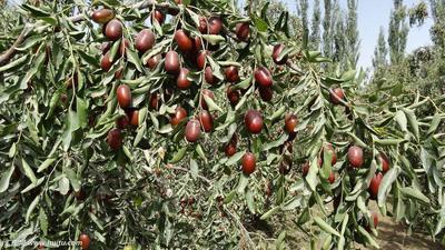 新疆维吾尔自治区图木舒克市图木舒克市新疆红枣 统货