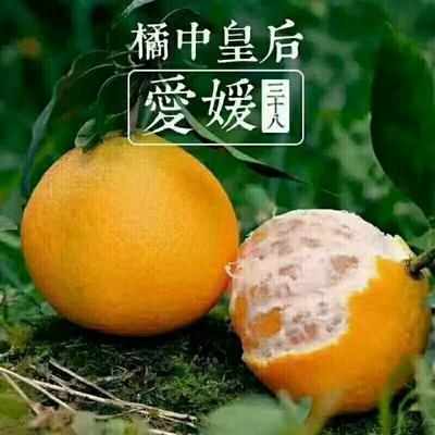 四川省眉山市仁寿县爱媛38号柑橘 7 - 7.5cm 3两以上