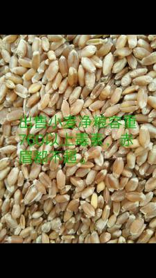 内蒙古自治区呼伦贝尔市鄂伦春自治旗混合小麦