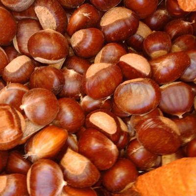 这是一张关于遵化板栗 统货 中粒的产品图片