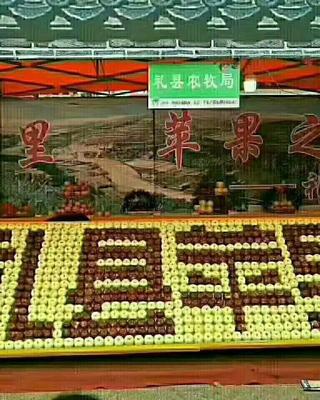甘肃省陇南市西和县花牛苹果 光果 全红 75mm以上