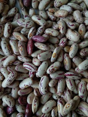 内蒙古自治区呼伦贝尔市鄂伦春自治旗奶花芸豆