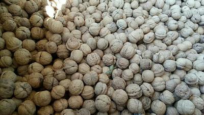 这是一张关于棉核桃的产品图片