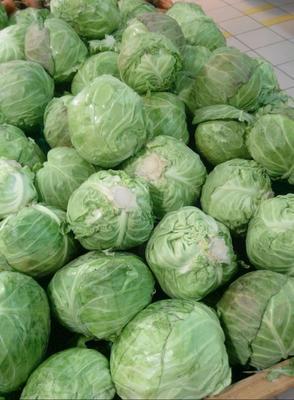 这是一张关于绿甘蓝 2.5~3.0斤的产品图片