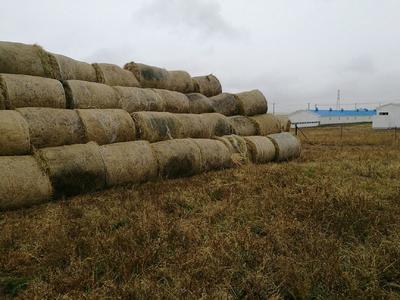 内蒙古自治区呼伦贝尔市满洲里市羊茅