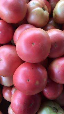 这是一张关于大红硬果 不打冷 硬粉 弧二以上的产品图片