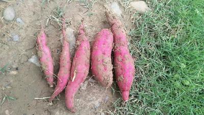 这是一张关于馨香迷你小红薯 红皮 3两以下的产品图片