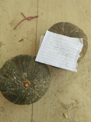 甘肃省张掖市山丹县日本南瓜 1~2斤 扁圆形