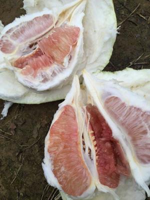 这是一张关于红心柚 2.5斤以上的产品图片