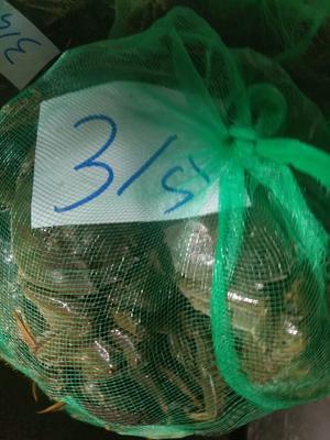 江苏省泰州市兴化市兴化螃蟹 3.0两 公蟹