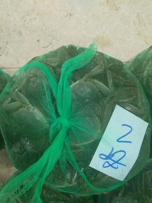 江苏省泰州市兴化市兴化螃蟹 2.0两 母蟹