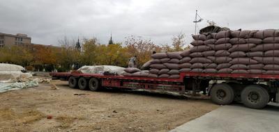 新疆维吾尔自治区阿勒泰地区阿勒泰市601葵瓜子 散装