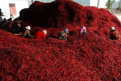这是一张关于云南丘北辣椒 10~15cm 红色 中辣的产品图片