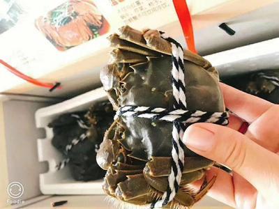 这是一张关于固城湖河蟹 3.0-3.5两 公蟹的产品图片