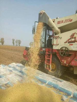 这是一张关于黄黄豆 生大豆 1等品的产品图片