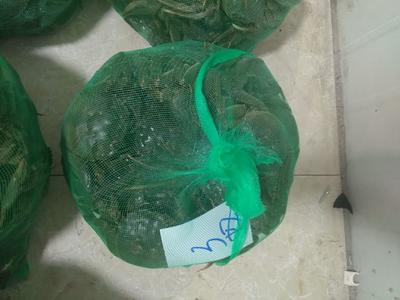 江苏省泰州市兴化市兴化螃蟹 3.0两 母蟹
