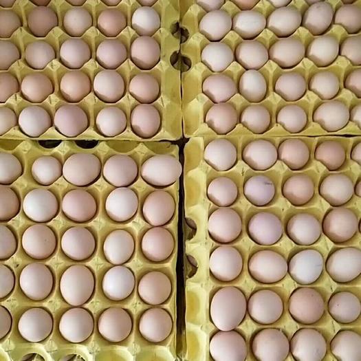 土鸡蛋 箱装 食用