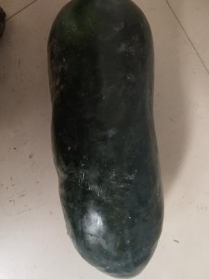 河北省邢台市隆尧县黑皮冬瓜 15斤以上 黑皮