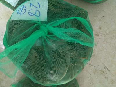 江苏省泰州市兴化市兴化螃蟹 2.8两 母蟹