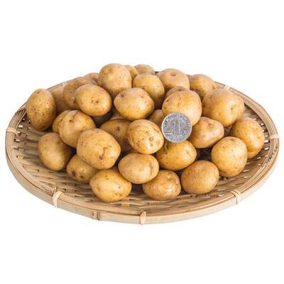 这是一张关于硒土豆 1两以下的产品图片