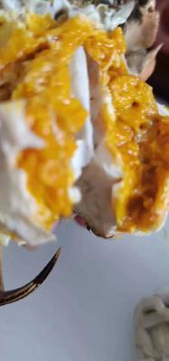 安徽省宣城市宣州区水阳螃蟹 2.0-2.5两 统货
