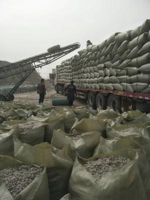 新疆维吾尔自治区阿克苏地区沙雅县棉籽壳
