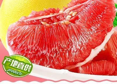 这是一张关于平和蜜柚 2.5斤以上的产品图片