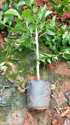 这是一张关于景观盆栽的产品图片