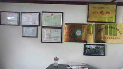 云南省大理白族自治州大理市奶皮 2-3个月 冷藏存放