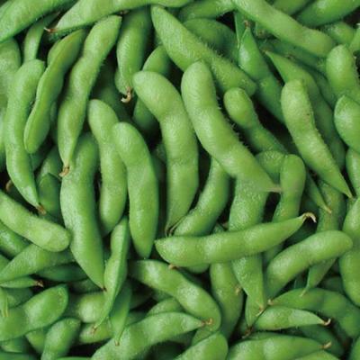 吉林省长春市南关区开心绿毛豆 30克以上