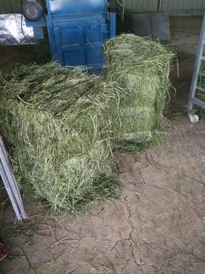 这是一张关于提摩西草的产品图片