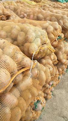 这是一张关于青薯9号 2~4两的产品图片