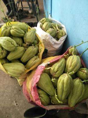 贵州省黔南布依族苗族自治州惠水县金丝搅瓜种子 种苗