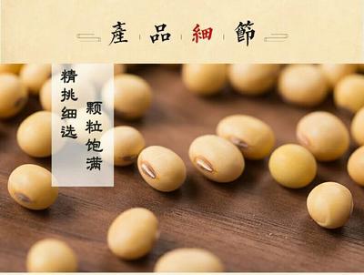 云南省昆明市官渡区赤花小豆