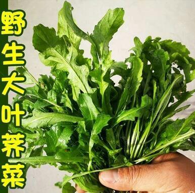山东省临沂市平邑县荠菜种子