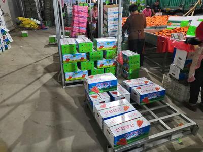 河北省石家庄市藁城区三红胡萝卜 15cm以上 5两以上 5cm以上