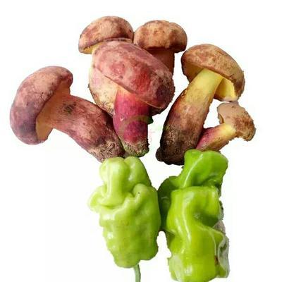 四川省凉山彝族自治州西昌市鲜牛肝菌 野生 1.0%以下 1.0%以下 鲜货