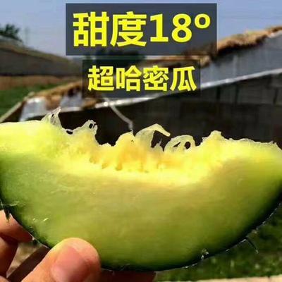 陕西省咸阳市彬县网纹蜜瓜 2斤以上