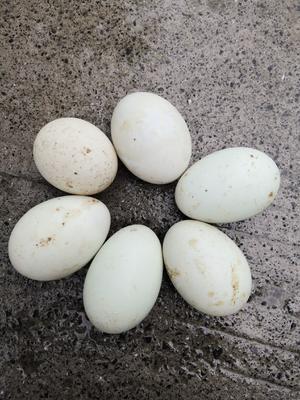 贵州省黔东南苗族侗族自治州三穗县麻鸭蛋 食用 散装