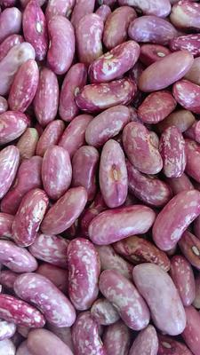 内蒙古自治区呼伦贝尔市鄂伦春自治旗红芸豆