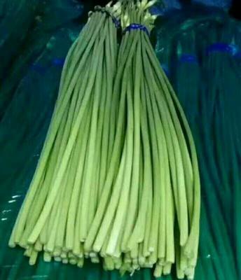 山东省临沂市沂水县白帽蒜薹 一茬 60~70cm 通货